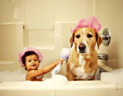 Pet Health Products