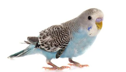 Parakeet 101 - Your Loved Pet Store