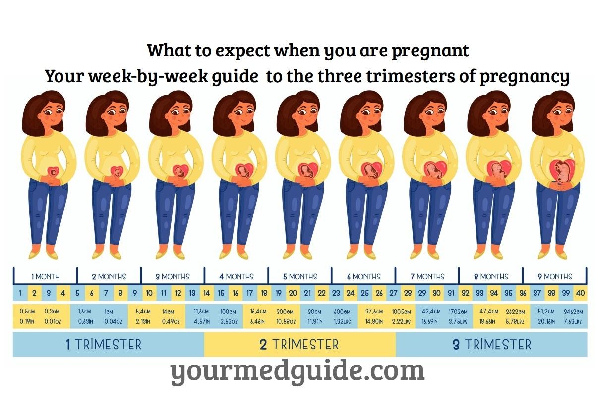 Pregnancy Guide Week By Week
