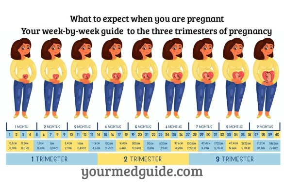 What to expect when you are pregnant a week by week guide to the three trimesters.