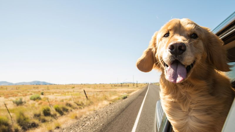 What To Do If You're On A Road Trip With Your Pet & Need An Emergency Vet