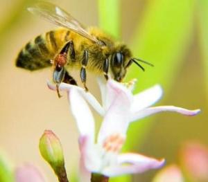 Bees-5432145