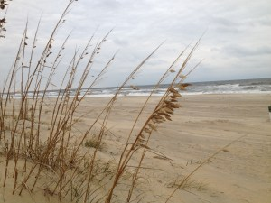 sea oats vb