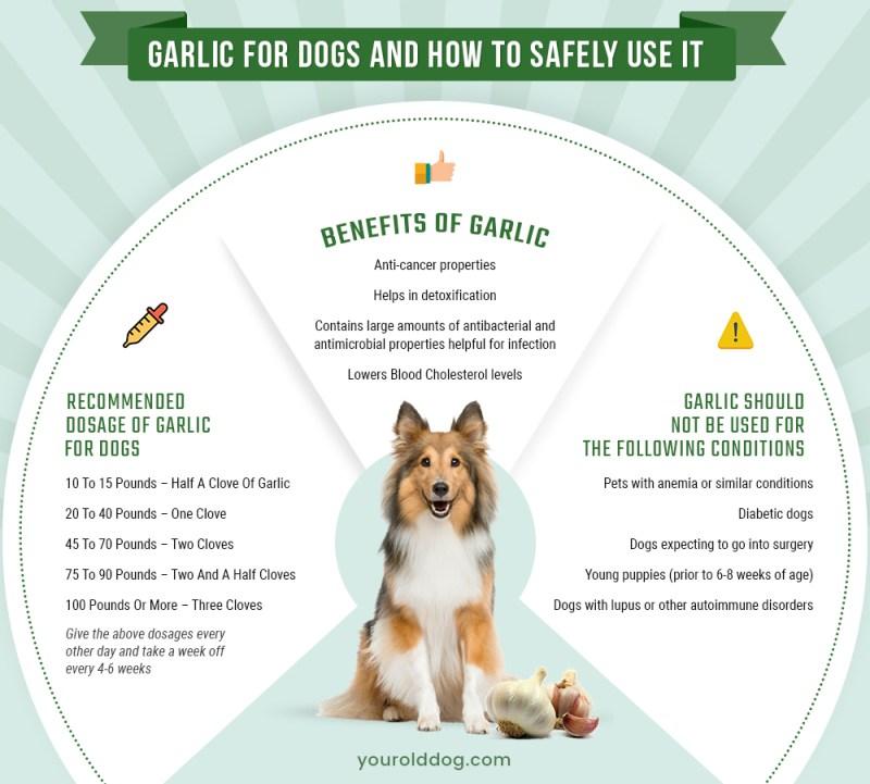 feeding garlic to dogs