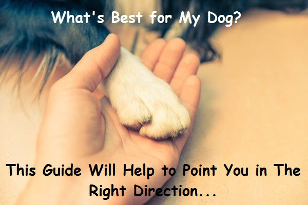 image for article on whats best for my dog