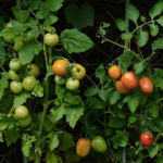 Gardening hacks for Growing Your Own Produce: The Handy Hacks You Need To Know!