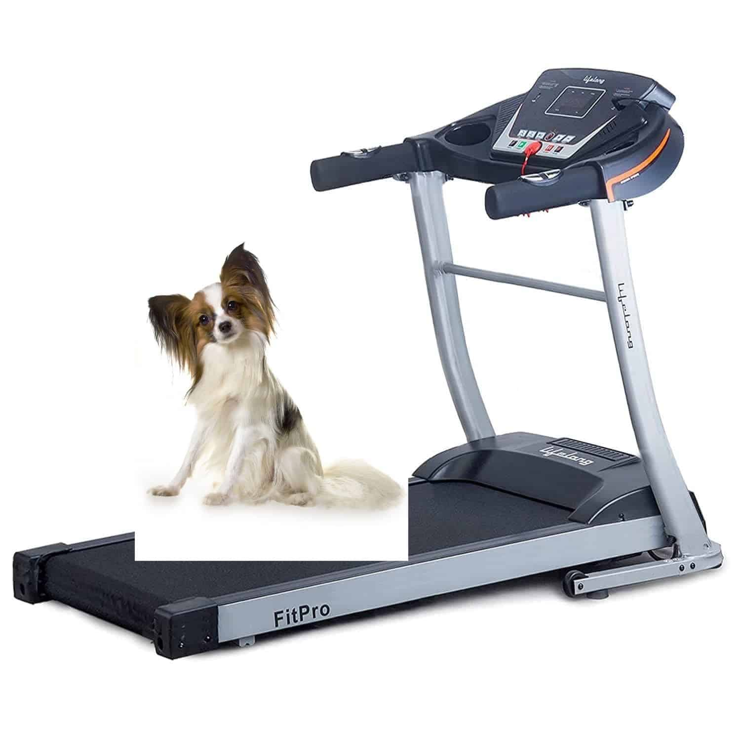 Best treadmill for Dogs & Humans