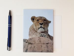 Deep in Thought Lioness Greetings Card