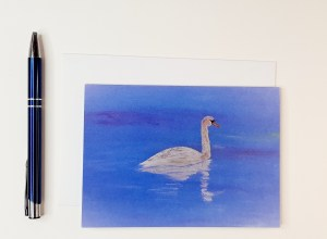 Cygnet in Transition Greeting Card