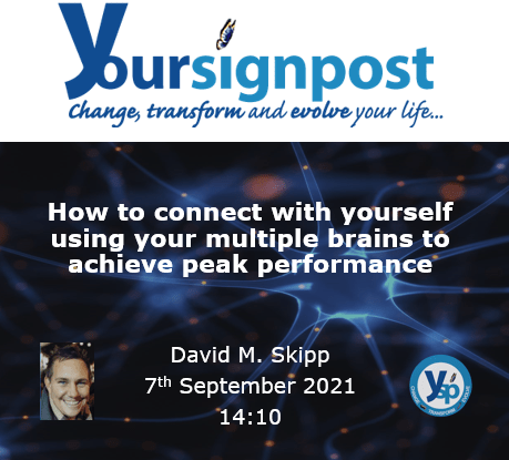 """Read more about the article Ysp.Life – """"How to connect with yourself using your multiple brains to achieve peak performance."""""""