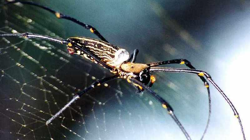 Spider Web Texas