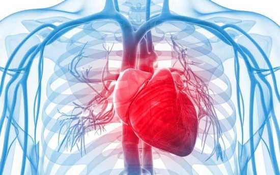 Cardiovascular Health Impact