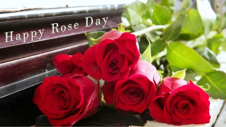 Happy Rose Day pics
