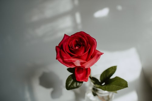 rose day special message