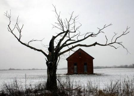 dry-tree-house-dry-land