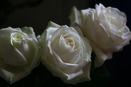 three-white-rose
