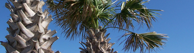 tree trimming, messy palm trees - Bill Salvatore, Realty Excellence, Arizona Elite Properties 602-999-0952