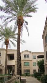 Building housing Unit 118 from pool - 5303 N 7th St, Phoenix AZ - Distant view of unit 118 - Bill Salvatore, Arizona Elite Properties 602-999-0952 - Arizona Real Estate