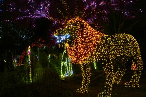 Yellow and orange lights form a 3D Lion - Thank you Thursday - Alligator at Phoenix Zoo Lights 2016 - Phoenix Zoo and SRP - Bill Salvatore, Arizona Elite Properties 602-999-0952 - Arizona Real Estate