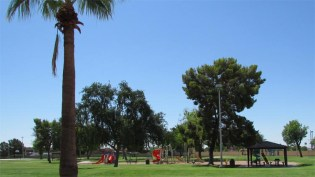 Large grassy park surrounded by tall shade trees with palms in the foreground and playground equipment in the center - 945 N Pasadena, Mesa AZ - Park Centre Patio Homes - Bill Salvatore, Arizona Elite Properties 602-999-0952 - Arizona Real Estate