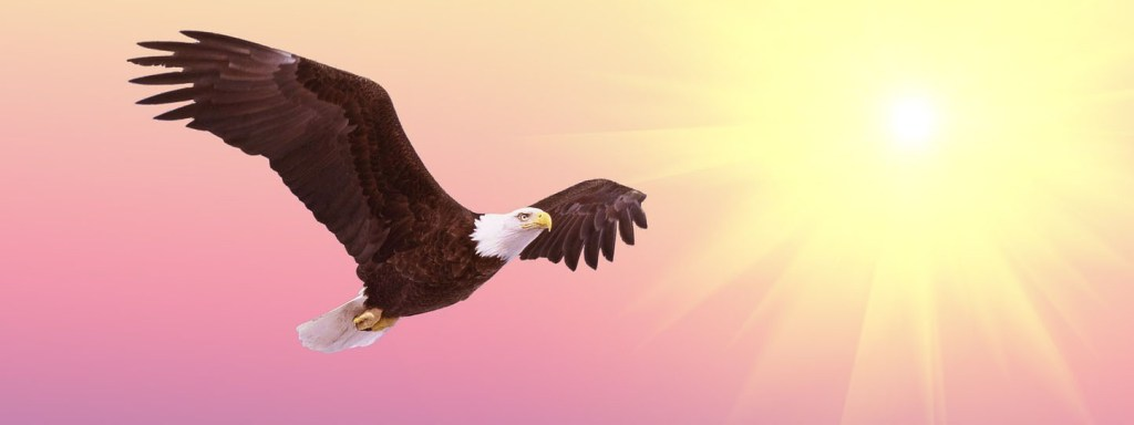 freedom-banner