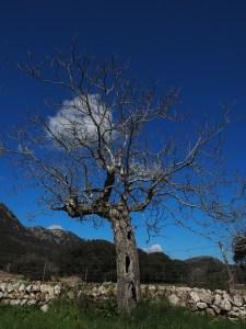 dead tree pixabay