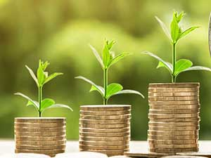 money plant growing