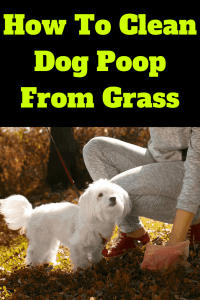 How To Clean Dog Poop From Grass