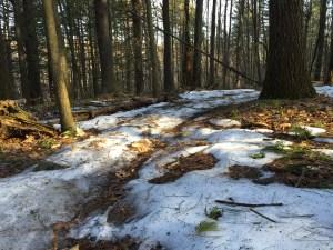 雪が溶け始めた4月の森でジョギング再会