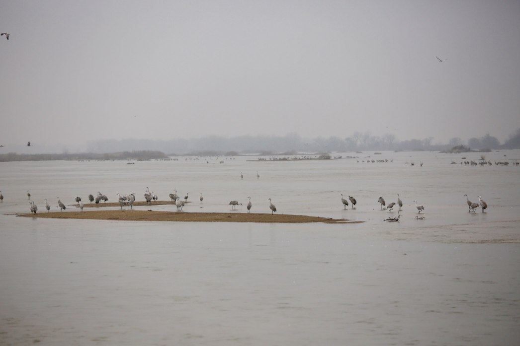Sandhill cranes on the Platte River Audubon blinds