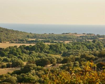 Domaine de Murtoli A Tiria view