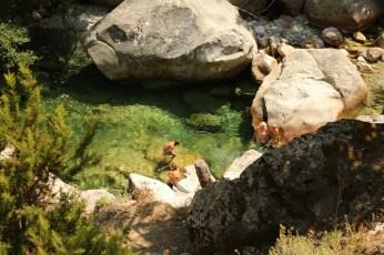 Gorge de Restonica kid swimming