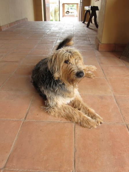 Estancia Colomé friendly dog