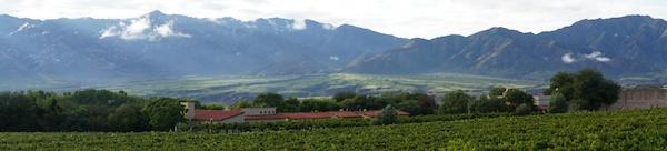Colomé vineyards panorama