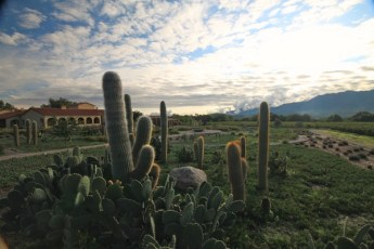 Colomé vineyards cactus