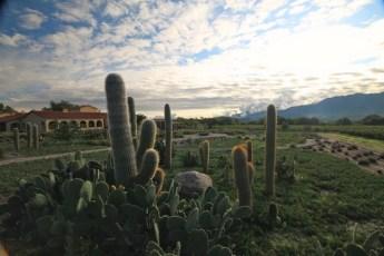 Colomé vineyards cactus