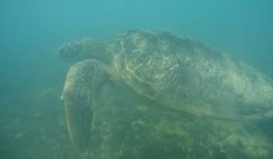Swim with the sea turtles in the Praia do Sueste