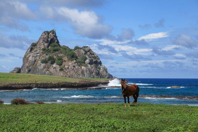 Horse near Ponta de Air France
