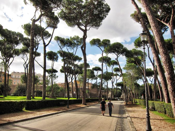 Villa Borghese pine trees