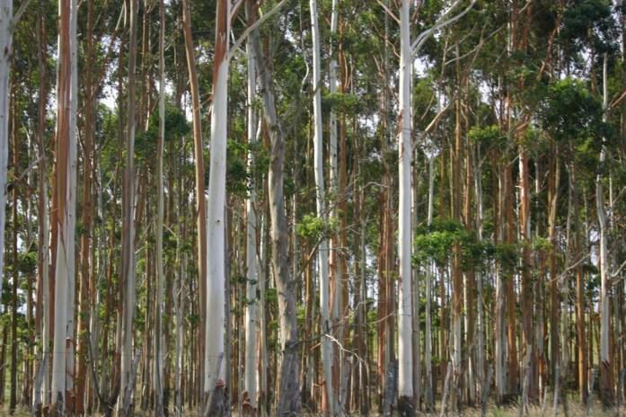 Garzon trees