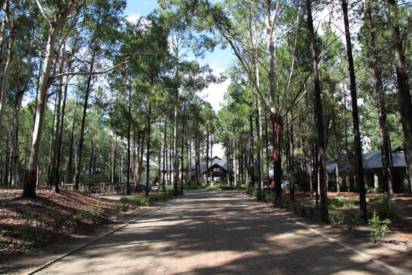 Four Seasons Carmelo entrance The first thing that hits you are the trees. Glorious 40ft pines all around, on a dramatic drive up to the entrance.