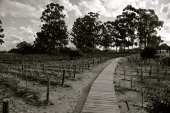 Four Seasons Carmelo pathway