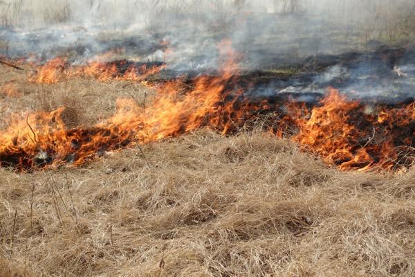 Flying W Ranch Flames in the Flint Hills fire
