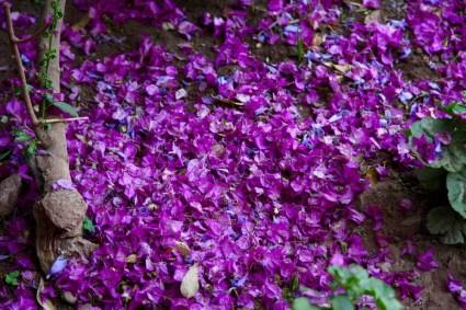 Marrakesh flowers