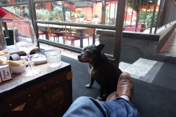 The Yard Milano house dog