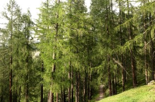 San Cassiano forest