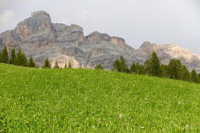 San Cassiano wildflowers