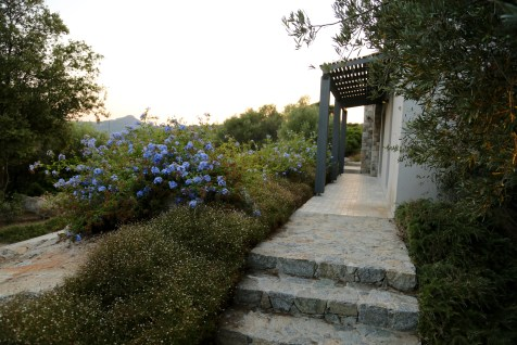 A Piattatella flower landscaping