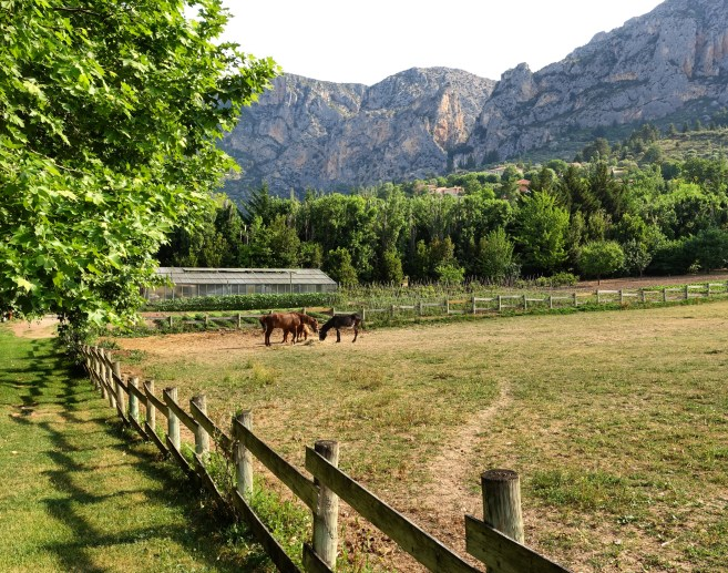 Bastide de Moustiers field horses