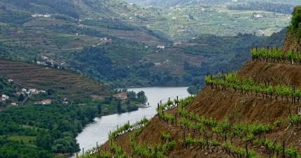 Douro Valley terraced vineyards
